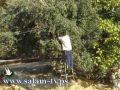 طولكرم - ورشة عمل حول الإهتمام بشجرة الزيتون