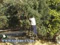 زراعة طولكرم تعقد محاضرتين حول الاغنام وعصر الزيتون