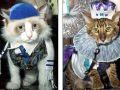بالفيديو والصور : عرض ازياء قططي