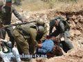 إصابة واعتقال أحد عشر مشاركا في مسيرة بيت جالا المناهضة للجدار