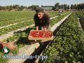 طولكرم - الزراعة والمهندسين العرب تنفذان ورشة عمل في باقة الشرقية