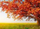 فصل الخريف يبدأ الثلاثاء
