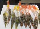 القبض على متسولة تبيع المخدرات في رام الله والقدس