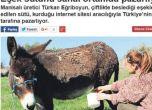 تركيا - ارتفاع أسعار الحمير بسبب زيادة الطلب على حليبها