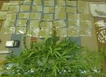 الشرطة تضبط قرابة الكيلو غرام من مواد مخدرة في طولكرم