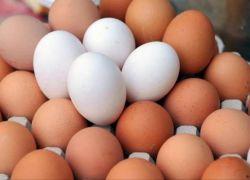 غزة تستهلك 547 ألف بيضة يومياً!