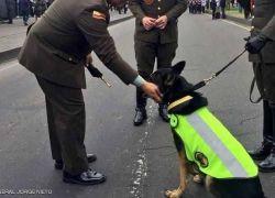 عصابة تخصص 70 ألف دولار لم يأتي برأس كلبة بوليسية !