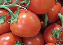 دراسة: الطماطم تساعد فى الوقاية من الإصابة بالسكتات الدماغية