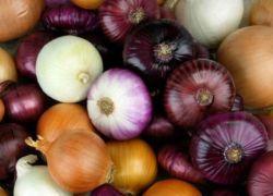 البصل الأحمر أم الأبيض.. أيهما أفضل للصحة؟