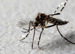 هل ينقل البعوض والذباب فيروس كورونا من شخص إلى آخر؟
