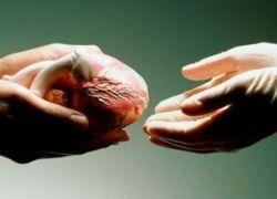 73.3% من المواطنين مع التبرع بالأعضاء البشرية