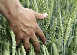 اتحاد المزارعين بالضفة يبدأ فعاليات احتجاجية الأسبوع المقبل