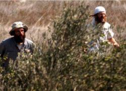 مستوطنون يهاجمون مزارعين في أراضي شوفة جنوب شرق طولكرم