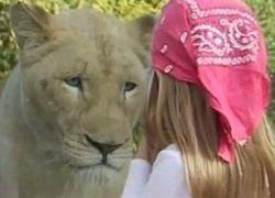 نسيت وجود الحاجز : رعب اصاب طفلة كانت تقف امام الاسد - فيديو