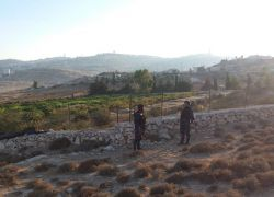 الشرطة بمساندة الامن الوطني تضبط مشتل ضخم للمخدرات شمال شرق القدس