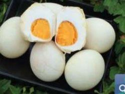 تناول البيض الكامل يُحسن مستوى الدهون في الدم ويساعد في السيطرة على الوزن