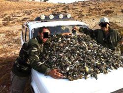 الملايين من الطيور المهاجرة التي تنتمي الى أنواع مهددة بالانقراض تقتل سنوياً في لبنان