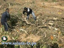 جرافت الاحتلال تشرع بتجريف أراض شاسعة في قرية نحالين ببيت لحم