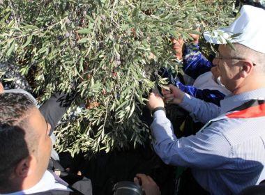 رئيس الوزراء يشارك أهالي بلدة قفين في قطف الزيتون - شاهد الفيديو والصور