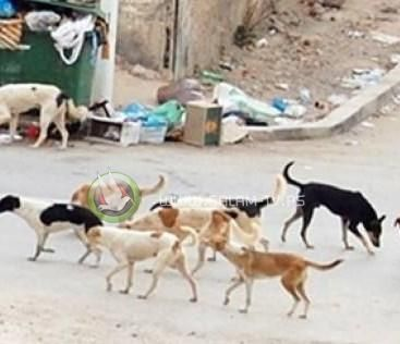 مصر ستُصدّر الكلاب الضالة الى كوريا