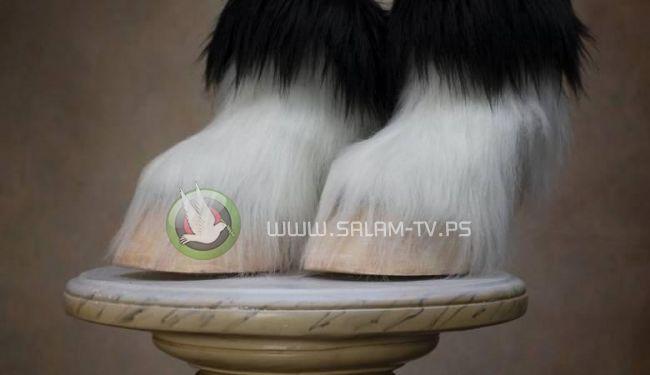 """آخر صيحات الموصة ...حذاء """"رجل الماعز"""" بسعر يصل لـ 524 دولار"""