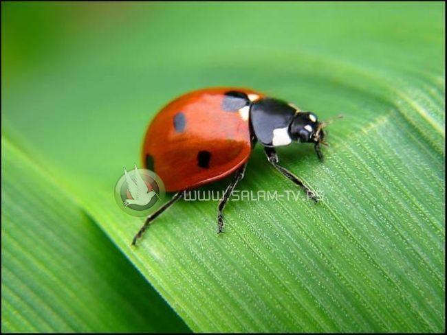 دراسة: انخفاض أعداد الحشرات يهدد العالم بكارثة