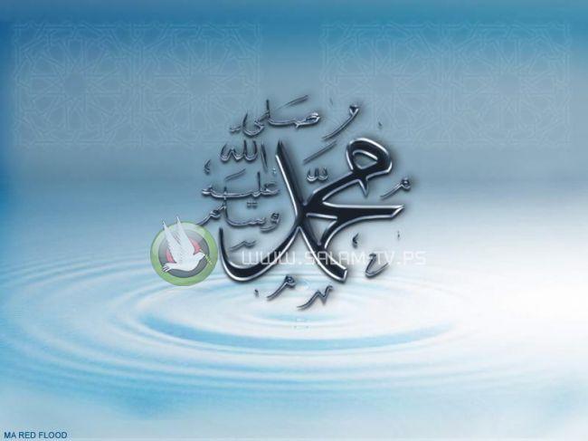 في ذكرى المولد النبوي - بقلم : نرمين وليد بكر