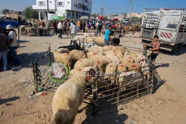 ارتفاع أسعار الأضاحي يقلل مبيعاتها في السوق الفلسطينية