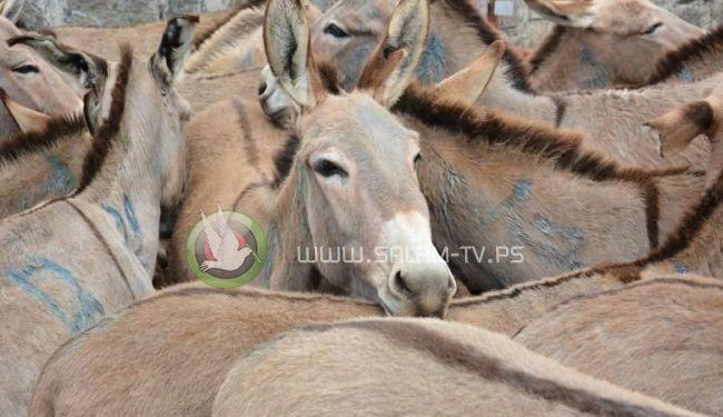 """لحوم الكلاب والحمير تغزو الأسواق المصرية """"صور """""""