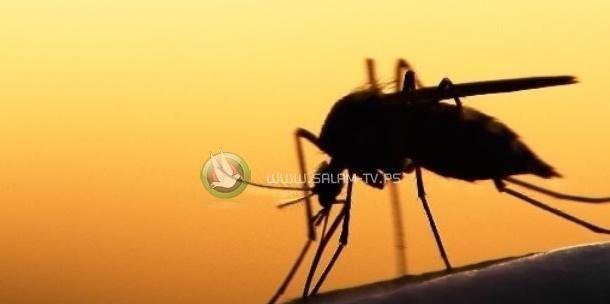اكتشاف بعوض مصاب بفيروس حمى النيل في الضفة