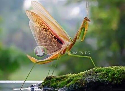 خبراء الفاو: الحشرات غذاء غني بالحديد