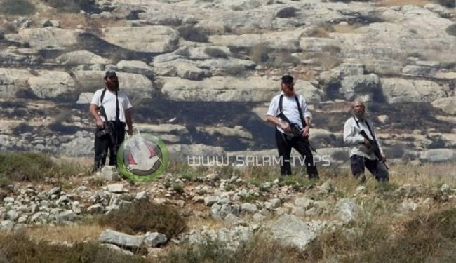مستوطنون يصيبون راعي أغنام برضوض والاحتلال يعتقل آخر في الأغوار