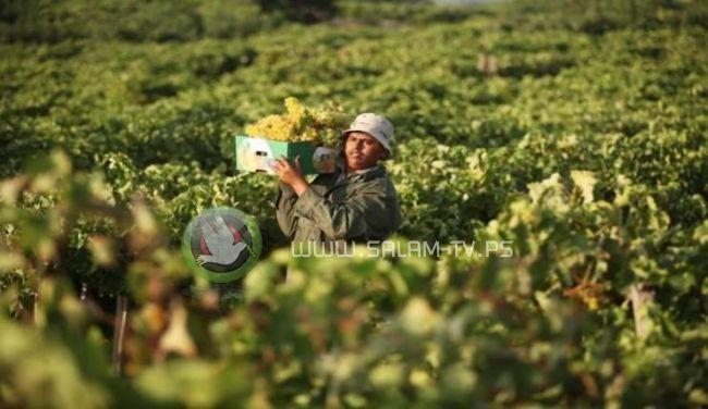 الأردن: لن نتردد في استيراد حاجتنا من فلسطين