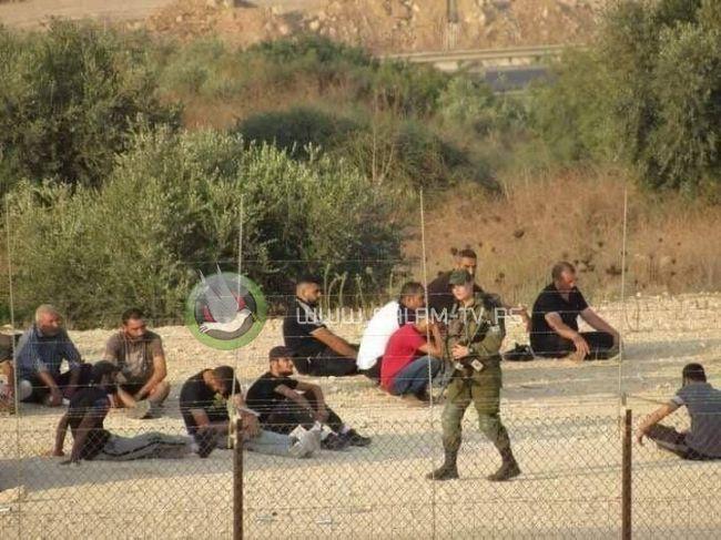 الاحتلال يطارد العمال ويحتجز العشرات منهم غرب فرعون جنوب طولكرم