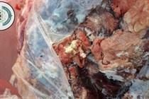 الخليل- ايقاف ملحمة عن العمل واتلاف 200 كغم لحم غير صالح