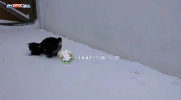 قط يحاول الامساك بندف الثلج المتساقطه - شاهد الفيديو