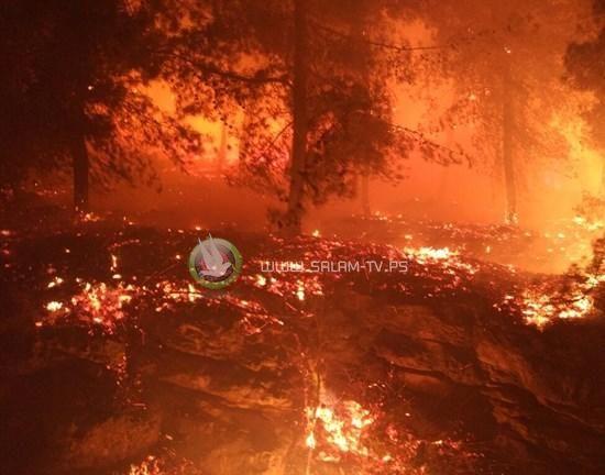 حريق كبير جنوب الناصرة